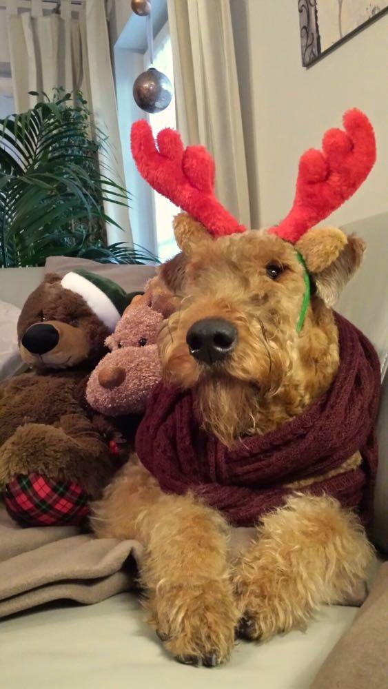 Weihnachtsfreuden mit vielen Geschenken bei Ylva in Rositz - 2 Bilder.
