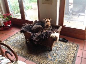 Hund bei Finck's sein - das ist das grosse Ziel ! Sessel und Fell ... einfach toll!