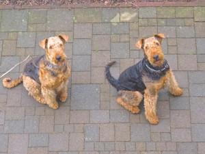 So sitzen unten die beiden Hunde-Nessy und Mara vor dem Küchenfenster. Es duftet aus der Küche heraus, ist da auch etwas für uns dabei ?? !!