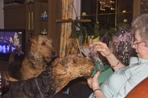 Und dann gibt es noch viel zu sehen und zu riechen, Frauchen's Geschenk zu Weihnachten - aber Schokolade bekommen die Hunde nicht ! Nein.