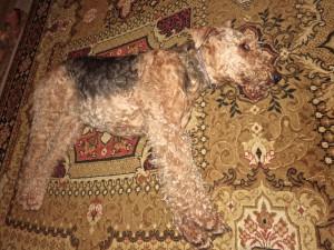 Auch die Hunde geniessen die Ruhe - Nessy schläft viel und fest.