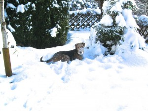 Na herrlich, jetzt hat sie sich eingegraben, badet im Schnee, da liegt ja auch reichlich!