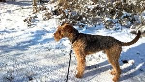 Ja, hier steh ich nun, Schnee, was soll ich damit, das muss ich erst noch mal ausprobieren.