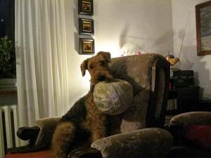 Ja, so bin ich, mein Ball (etwas schlabbrig, da kann ich ihn besser halten) und mein herrlicher Sessel - das ist doch ein sehr schönes Leben.