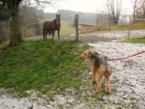 Und auch Pferde sind meine Kumpels, habe ich schon öfter gesehen, und ganz toll: DEN ERSTEN SCHNEE HIER IN SCHMIEDEBERG IN DIESEN TAGEN _ AUCH TOLL!
