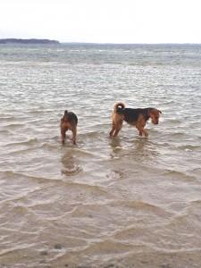 Und hier ist Oskar mit Freundin Debby im Wasser, da gibt es viel zum Untersuchen.