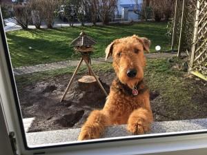 Schnell mal die Beobachtung der Vögel beim Fressen aufgeben, und zum Fenster reinschauen, ob da alles in Ordnung ist.