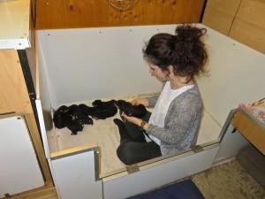 So, ca. 15 Jahre später, sie kommt, Schuhe runter und mit rein in die Wurfkiste. Mama Nessy freut sich besonders, beide kennen sich gut.