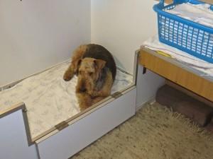 Ganz lieb und friedlich - Nessy ist wirklich ein toller Hund und scheint ihre Aufgabe zu kennen.