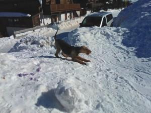 Die Familie war zum Wintersport, der Hund scheint den Schnee und den Winter zu lieben.