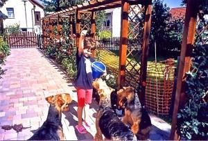 Hier, mitten im Gedränge, wir, die Hunde, auf der Pergola das Amselnest!