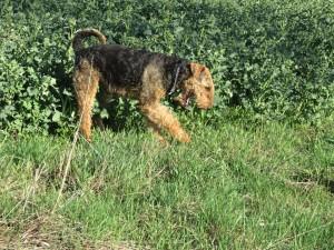 Da gibt es viel zu finden, Spuren, Mäuselöcher, ein anderer Hund war hier - sehr interessant. Und Herrchen entspannt sich auch.