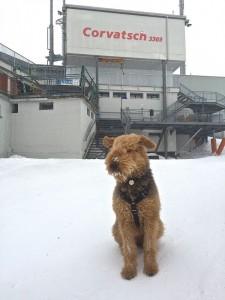 Schauen Sie mal, diese Höhe, sicher Wind und kalt, der Hund hat es auch geschafft.