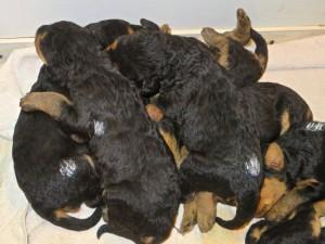 """Meistens ist es noch ein """"Hundeberg"""" - also alle übereinander - auch ein Rückenschläfer!"""