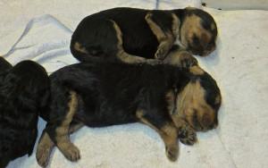 """Da kann man 2 solche Typen mal genauer ansehen, richtiger Tiefschlaf nach dem """"Futtern bei Muttern""""!"""