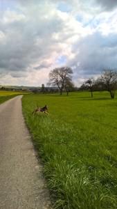 Ein sehr schönes Bild - Hund, Weg, Wolken, Bäume und Wiese, richtig idyllisch.