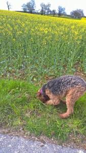 Ach ja - Erdöl-Terrier, kann auch ein Mäuseloch sein - auf jeden Fall, zu tun hat Wotan immer.