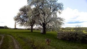 Das Bild mit dem grossen blühenden Baum und Hund gefällt mir auch sehr.