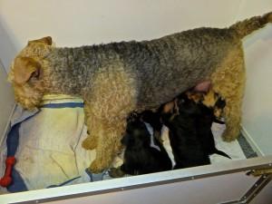 Die Zeit, in der Mutter Nessy sich zum Säugen hingelegt hat, ist vorbei, das ist zu anstrengend für sie.