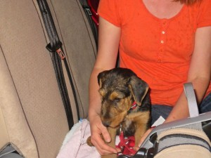 Hier fährt sie nun mit nach Hause, alle sind gespannt, der Hund sicher auch.