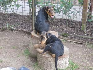 """Hier beide hintereinander auf den 2 Holzklötzen, """"siehst Du jemand""""-nein!"""