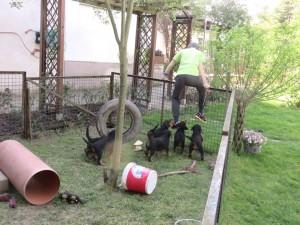 Ja, da links unten an der Zaunecke, da ist schon ein tiefes Loch - eben von Erdöl-Terriern gemacht!!