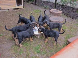 Appetit ohne Grenzen, alle pünktlich dabei, nach dem Fressen putzen sie sich gegenseitig die Mäuler ab.