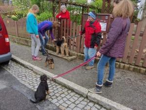 Besuch ist da, auch mit Hund, mehrere Menschen - so lernen die Welpen das Leben kennen.