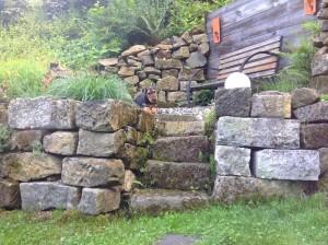 Das ist sicher im Garten oder auf einem Aussichtspunkt - Zasu wieder ganz diszipliniert, neugierig und gespannt.