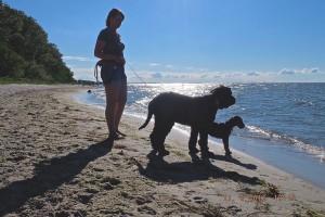 Herrlich, Zasu mit Freundin Shiva und Familie sind an der Ostsee angekommen - die Fahrt war einwandfrei, das klingt schon sehr gut.