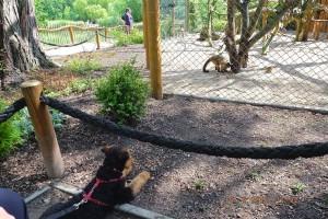 Und was ist nun das - Affen, sicher war es für den Hund auch ein interessanter Ferientag.