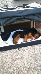 Auf der Terrasse, in der eigenen Box, undwieder schlafen.