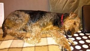 Hier schläft gerade Oxi, der Liebling und umgekehrt auch des jüngsten Sohnes der Familie.
