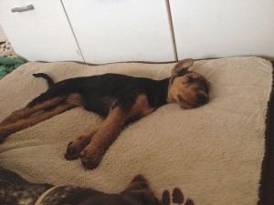 Zu Hause angekommen, über 500 km, und jetzt fest und glücklich schlafen, ganz entspannt und lang gestreckt.