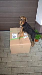 Ein Schnappschuss - ein Paket kam an, mit Hundefutter und Spielzeug??