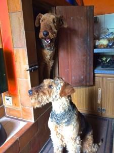 Oben an der kleinen Tür ist Mick, man sieht sein herrliches Fell in dem Alter, und vorn, in der Sonne, ist die liebe Queeny.
