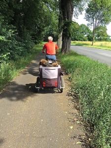 Also, das ist originell - Herrchen mit Hänger und den beiden Airedales, Frauchen mit dem Fahrrad hinter her. (BEI FISCHER'S HUND SEIN ...)