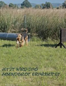 Ja, hier ist es auch für Hunde toll, richtig zum Toben und Ausarbeiten.