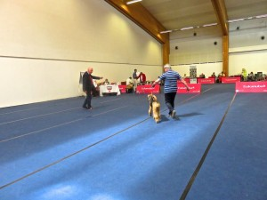 Die Ausstellung im herrlichen Messezentrum, viel Platz, grosse Ringe, alles bestens organisiert. Hier der Richter - Herr Siewert D.