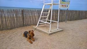 Da sitzt er nun, zunächst noch angeleint (Vorschrift hier) am Sandstrand und wartet auf ... sicher Toben.
