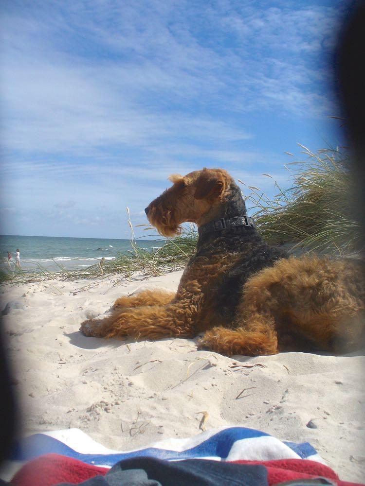 Und das ist YOYO VOM DIPPOLD, 1,5 Jahre alt, mit Familie am Kap Arkona, das erste Mal am Meer, man spürt so richtig ihr Interesse, man sieht einen sehr schönen und glücklichen Hund.