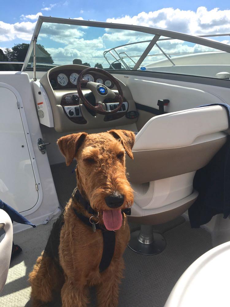 YSCO - man sieht es, tolles Boot, tolles Wetter, toller Hund - der Ausflug kann beginnen!