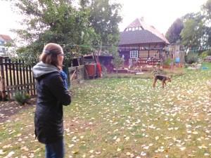 Hier ist Robin im grossen Garten, viel Platz, das Laub fällt schon.