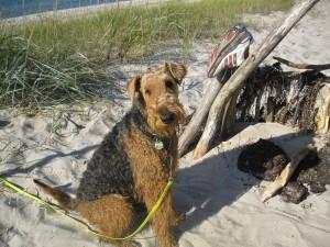 Das ist unser Wigwam am Strand-toll (wie wir früher).