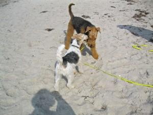 Tolle Hundebekanntschaften, hier ist einfach alles, was man braucht, um glücklich zu sein.
