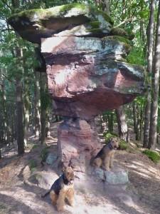 Hier bei einem Ausflug in der Pfalz - unser Ivo mit Kumpel Cliff zum 14.Mal.