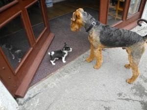 Komm, sei nicht so, lass mich rein, ich bin nicht der Einbrecher - reg dich nicht auf!