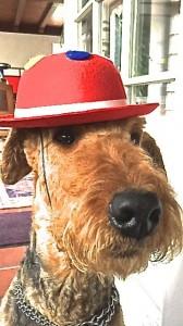 Auch das Bild hier - Hund mit Hut oder umgekehrt, beides chic - aber zusammen höchstens beim Fasching (uns da kurz).