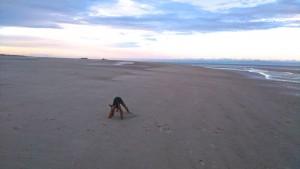 Das finde ich ein Superbild - Nordsee im beginnenden Herbst, und der Hund tobt glücklich herum.