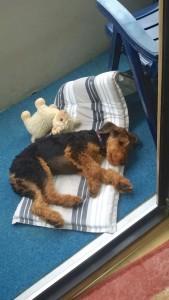 Zia zu Hause in Augsburg, sie hat sie sich eine Schlafstelle gesucht und gefunden.